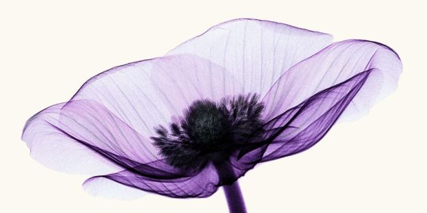 x_ray_anemone_2_by_coopr-d3frl8b-2